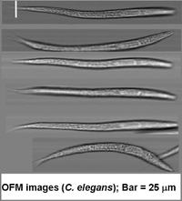 Images from the array clearly show the detail of the specimen worm.